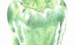 Green Pepper Illustration