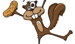 Squirrel Illustration for logo